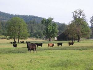 Cattle Ranches for sale in Northern California